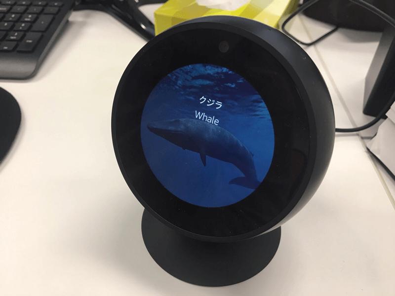 Amazon echo spot対応